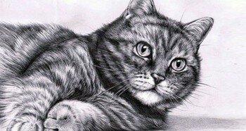 Рисование животных карандашом