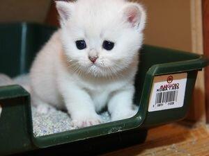 Самостоятельное нахождение котенком лотка