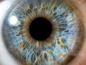 Радужка глаза человека