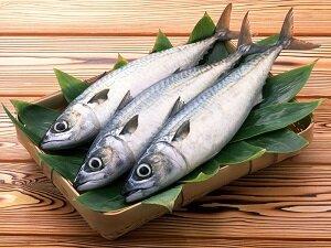 Свежая рыба для кормления хорька