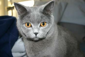 Блохи у кота