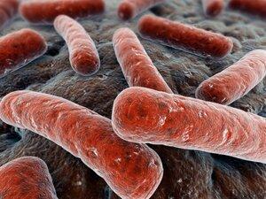 Различные бактерии в свином мясе