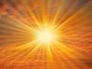 Вред прямых солнечных лучей для хойи