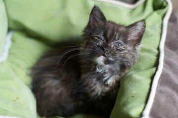 Больной котенок на подушке