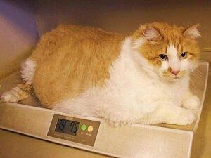 Взвешивание кота для определения возраста