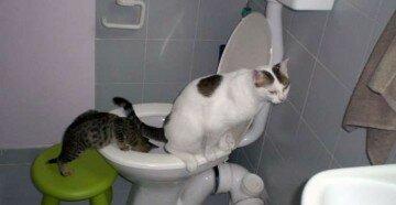 Кошка сидит на унитазе а котенок смотрит