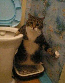 Кот раскарячился над лотком
