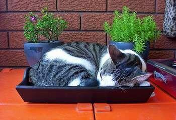 Котейка спит в лотке