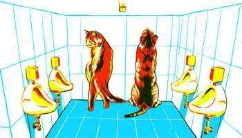 Коты и писюары