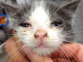 Мордочка больного котенка