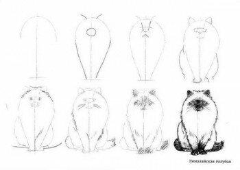 Рисуем кота поэтапно 1