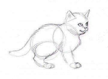 Эскиз котенка