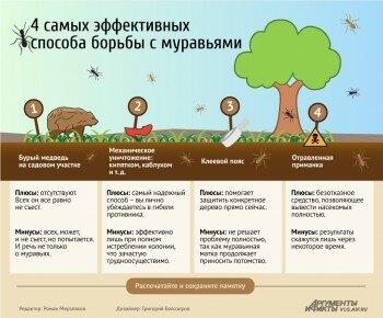 4 способа борьбы с муравьями