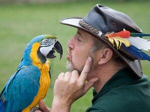 Проговаривание имени попугая