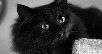 Идеи кличек для черного кота
