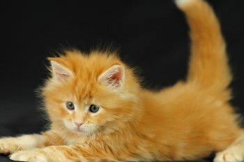 Выбор клички для рыжего котенка