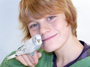 Частое общение с попугаем