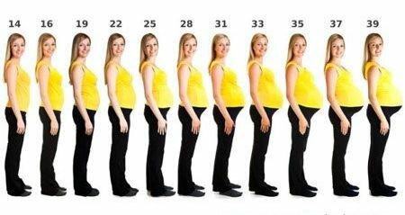 Размер живота в зависимости от срока