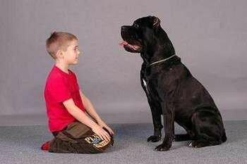 Ребенок и щенок кане корсо