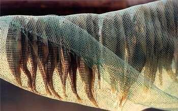 Рыба сохнет под сеткой