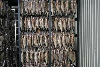 Сушится много рыбы