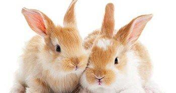 Декоративные кролики в домашних условиях