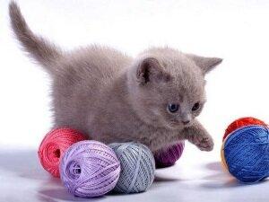 Применение Гамавита для котят