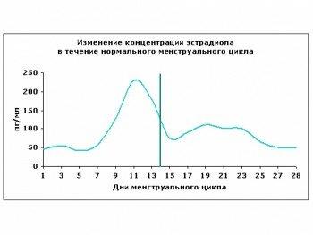Изменение концентрации Эстрадиола в течение нормального менструального цикла
