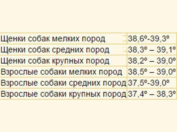 Нормы температур у собак