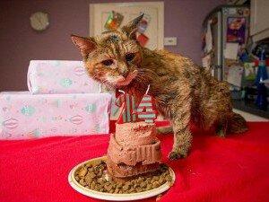 Котик - долгожитель