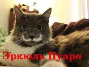 Забавное имя для котика, связанное с ассоциацией внешности