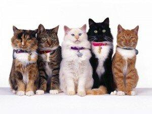 Разная продолжительность жизни разных пород кошек