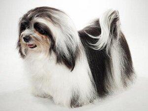 Определение возраста собаки по шерсти