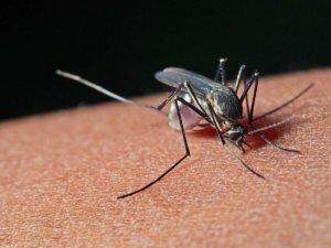 Зуд в пятке после укуса насекомого
