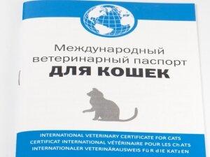 Паспорт кота с именем из питомника