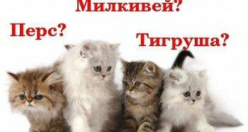 Выбор имени для котика