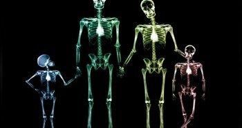 Кости в теле человека
