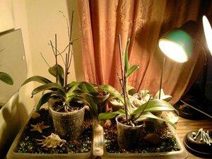 Освещение орхидей
