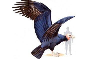 Самая крупная птица