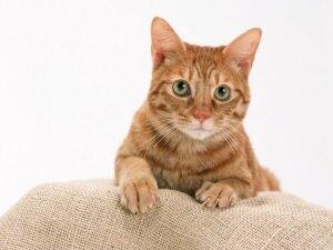 Дрессировка полуголодного кота