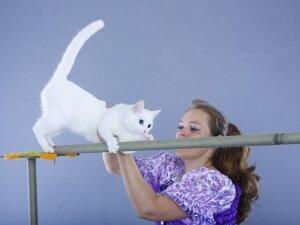 Обучение кошки