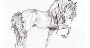 Лошадь карандашом