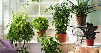 Выбор растений для дома